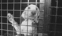BBC:英国宠物狗交易揭秘